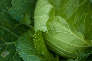 1日に必要な野菜量「350g」、きちんと取れてますか?