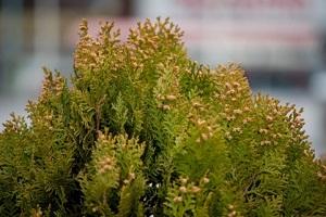 なぜ人は、突然「花粉症」にかかるのでしょう?