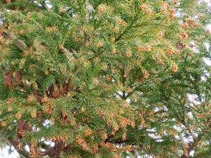 花粉の種類と飛散時期を知って、花粉症対策を考えてみませんか?:知っておくといい10種類の原因植物とは?
